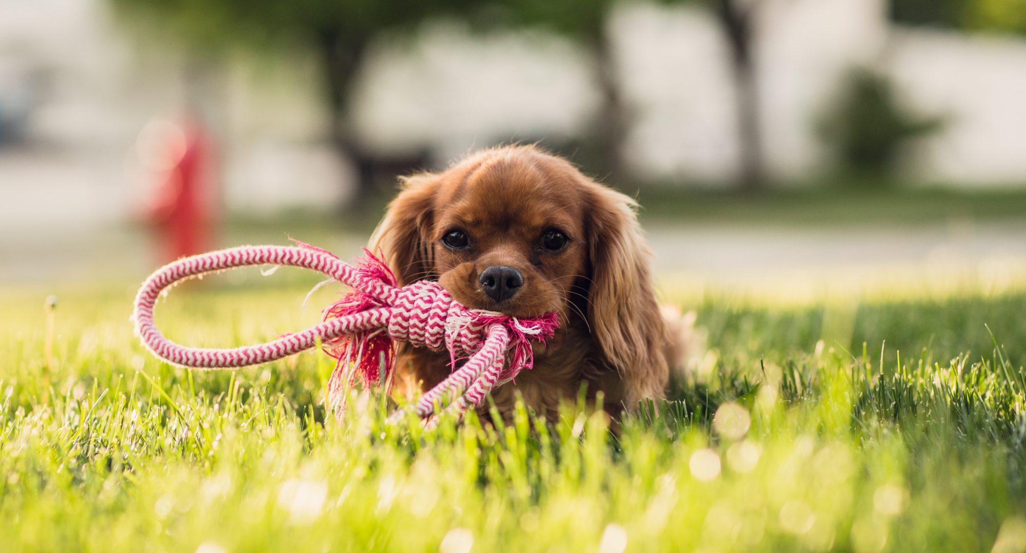 Hundeschule Kerstin Beck